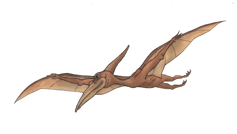pterodactyl_WEB